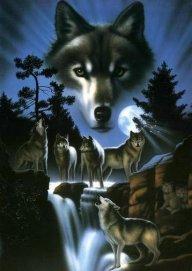 Wolfy2